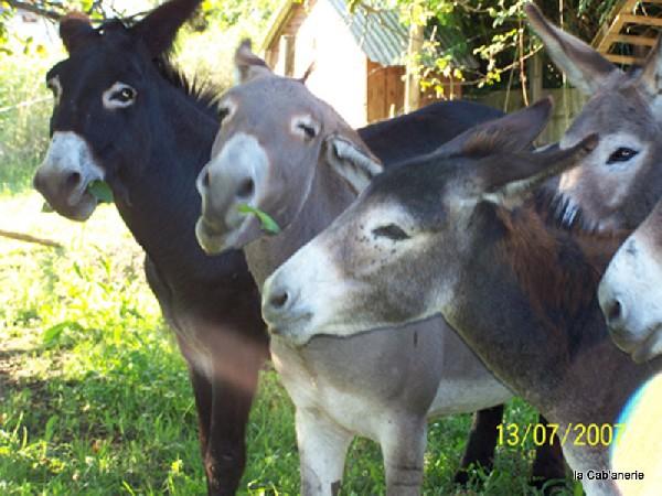Les ânes de la Cab'anerie
